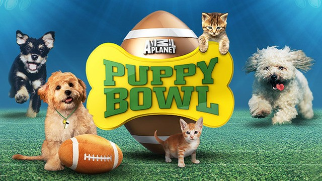Sports: Puppy Bowl